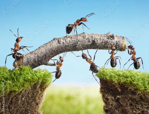ant teamwork picture - 1000×766