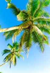 Palms Leaves Sea