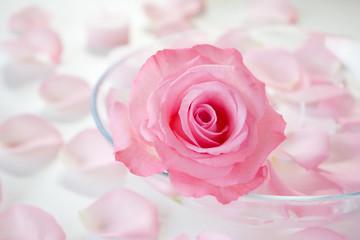 Fototapete - バラとアロマキャンドル