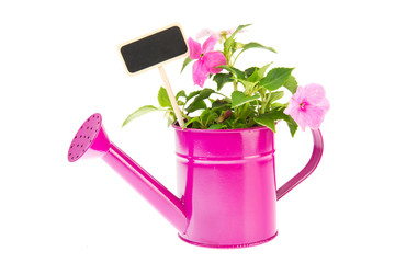 Watering can with Busy Lizzy