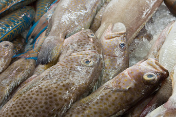 sea product from the adaman sea in local fish market