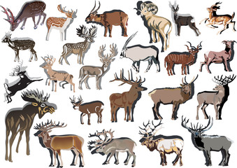 twenty three horned animals collection