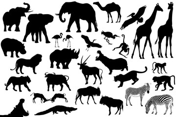 africa animales collage