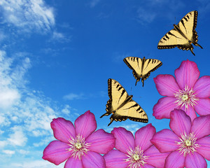 Butterflies, Flowers and Sky