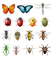 Updated version of vector insects - bugs and invertebrates