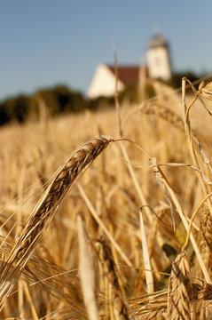 Barley and church