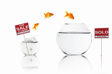 gold fish in a fishbowl