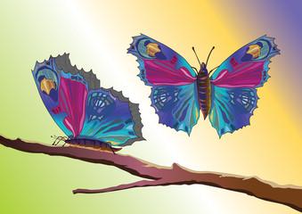 Kelebekler dalda