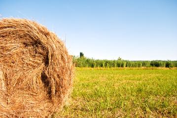 campo di grano con balle di fieno