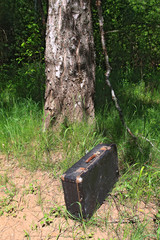 old valise near old birch