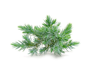 Juniper Branch Isolated on White Background