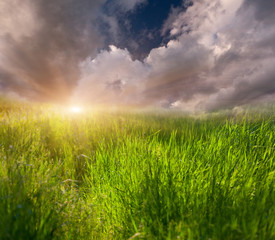 Background of grass and sky. Sunrise