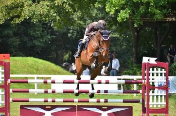 Pferd im Sprung
