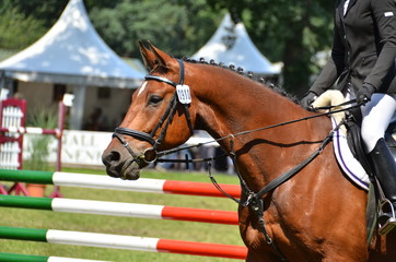 Pferdekopf Spingpferd