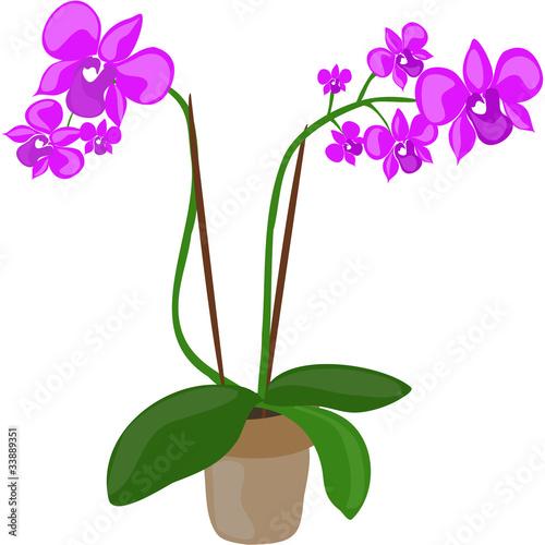 Orchideen\