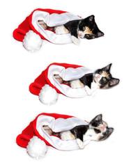 3 Versionen Katze in Weihnachtmannmütze