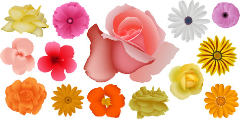 Beautiful Nature Flower Collection