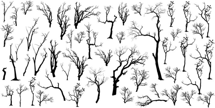 Isolated Concept Of Dead Trees Set