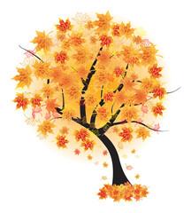 Autumn maple tree leaf fall