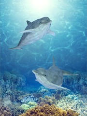 Photo sur Plexiglas Dauphins happy dolphins