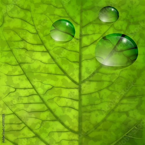 Foglia con gocce d 39 acqua leaf closeup with water drops for Finestra con gocce d acqua