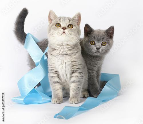 keep cats off flower beds