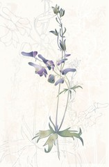 Greeting card with a wild flower.Illustration wild flower.