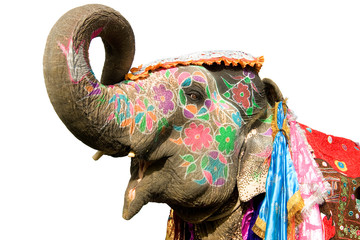 Colorful hand painted elephant , Holi festival , Jaipur, Rajasthan, India