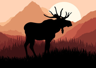 Moose in wild nature landscape