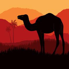 Bedouin camel caravan in wild africa
