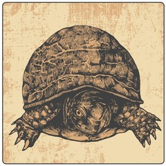 turtle and design element, engraved vintage style