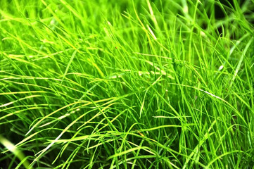 shiny grass background