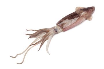 Whole single raw calamari