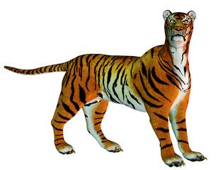Raubkatze Tiger stehend