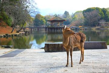 浮御堂の鹿