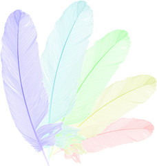 rainbow feathers isolated on white