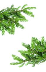 fir tree branch frame