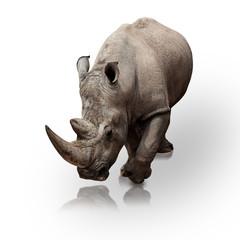 Photo sur Plexiglas Rhino rhinoceros