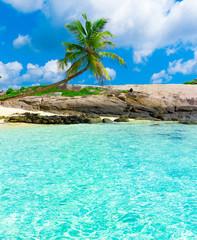 Eden Coconut Scene