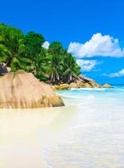 Dream Jungle Palms