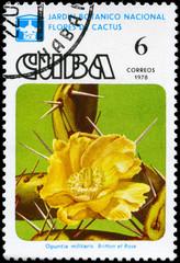 CUBA - CIRCA 1978 Opuntia