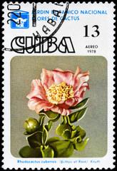 CUBA - CIRCA 1978 Rhodocactus