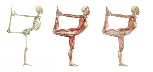 Yoga Dancer Pose - Anatomical Overlays