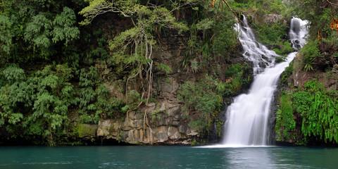 bassin Cormoran    île de la Réunion