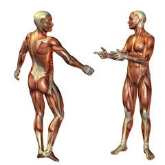 Wall Mural - Mann stehend Muskelstruktur