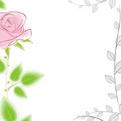 rose boder