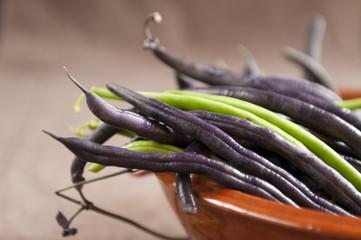 Violet Runner Bean