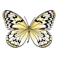 der Zitronenfalter / brimstone butterfly