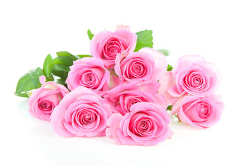 Pile of pink roses over white background