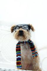 Canine Pilot